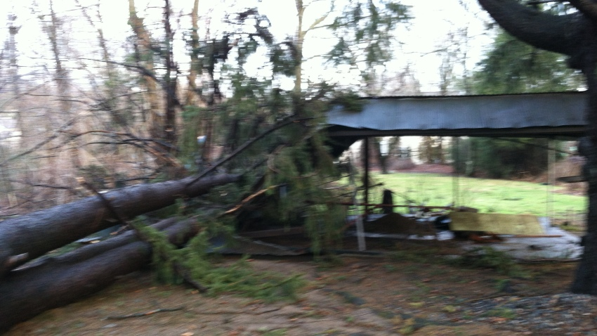 [UGCHAR-CJ-weather]My almost 90 foot pine gone