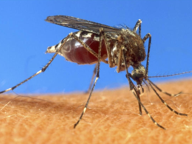 090909 mosquito