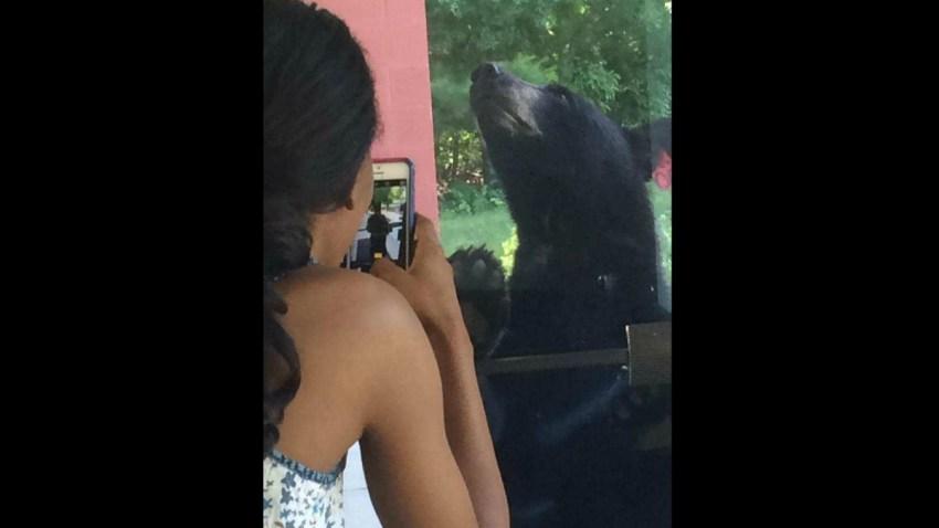 Black Bear 4 1200