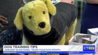 CT LIVE!: Dog Training Tips