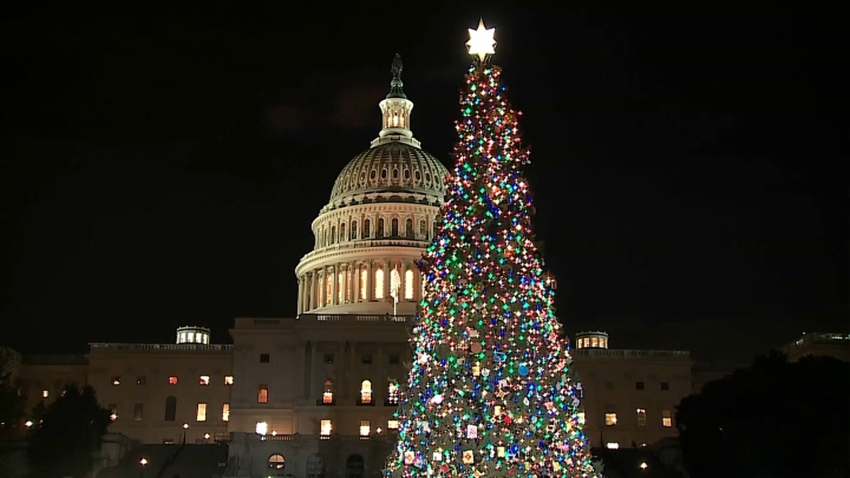 Capitol Christmas Tree 120419