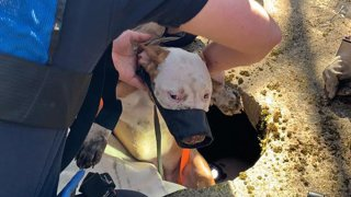 Dog after being rescued from well in Montville