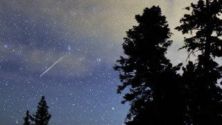 A Perseid meteor streaks across the sky above desert pine trees