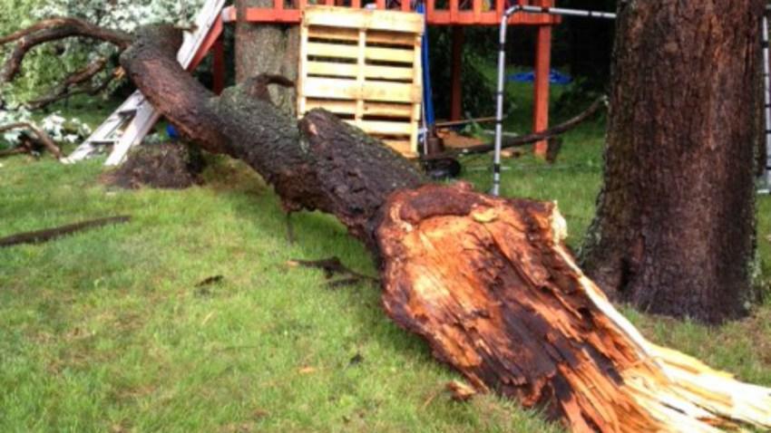 North Haven tree down Blakeslee Avenue North Haven 1200
