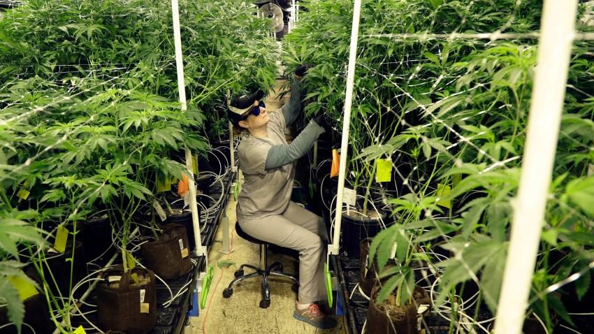 Marijuana Federal Grants