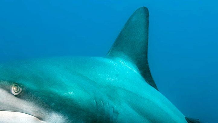 Shark-fin-generic