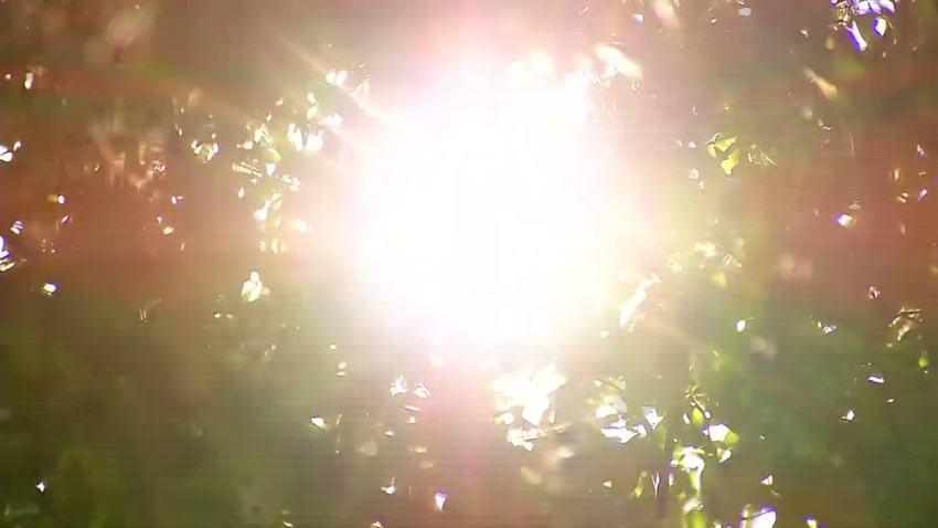 Sun_Trees_Heat_Generic
