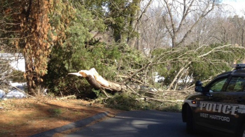 Tree down from Amy 1200