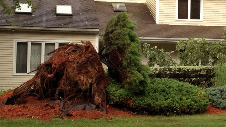 Tree down in Cromwell