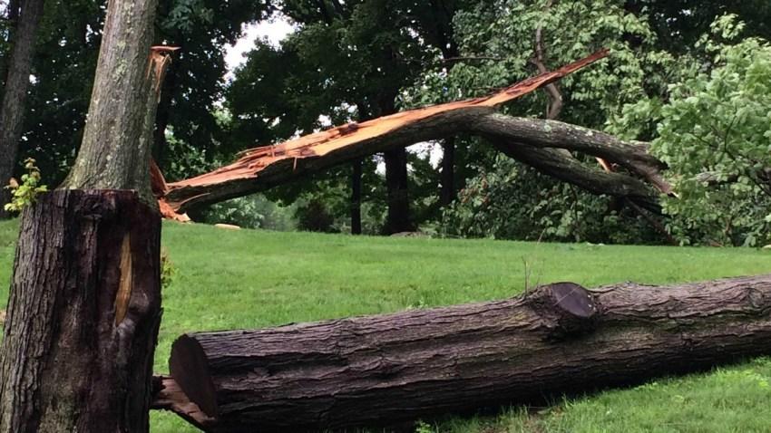 Tree down in Ridgefield 1200