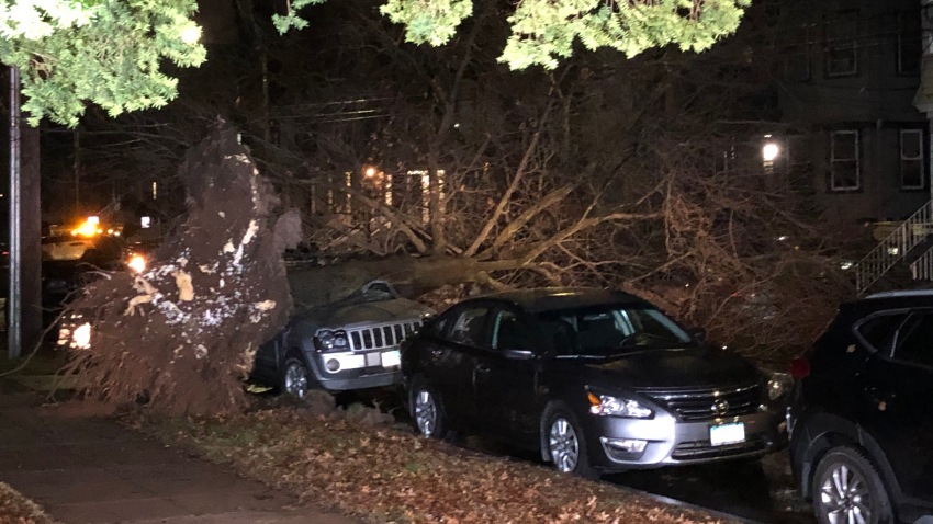 Tree Falls on Vehicle in New Haven