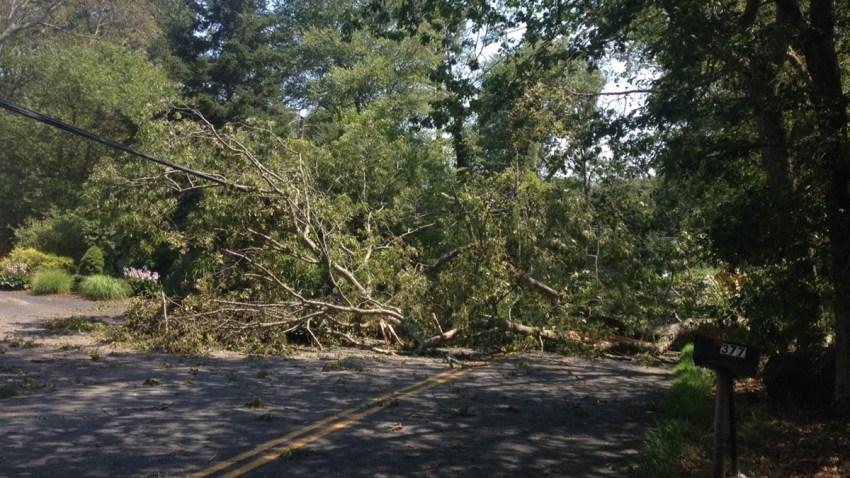 Trees down in Stonington 1200