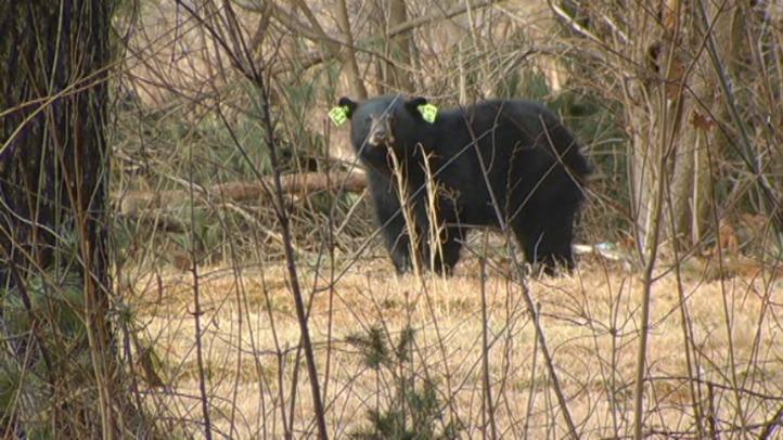 Windsor bear_722_406