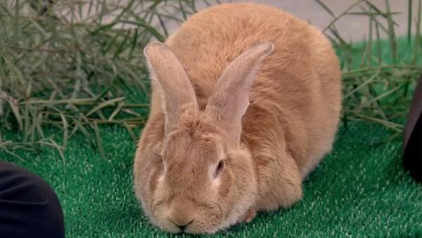 """[UGCPHI-CJ]""""@NBCPhiladelphia: Rabbits can no longer be prizes at carnival: http://t.co/6fPDLHjqtx http://t.co/V"""
