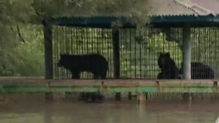 bears15