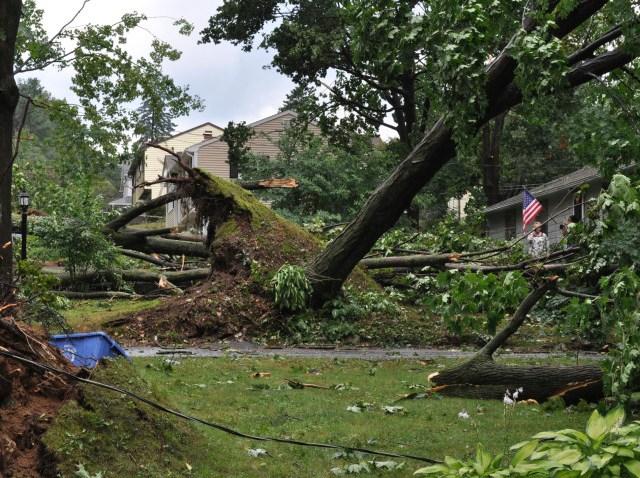 bristol trees down2