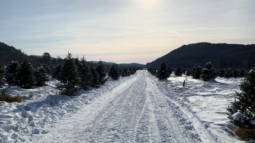 Christmas Tree Sales 2020 Christmas Tree Sale Concerns Among Local Farmers – NBC Connecticut