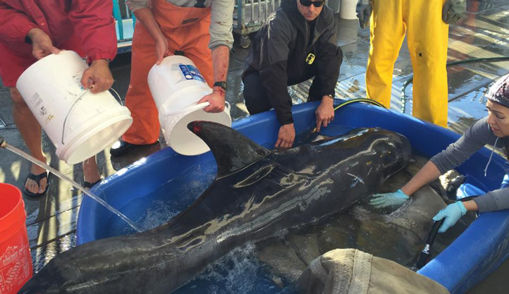 San-Pedro-dolphin-rescue