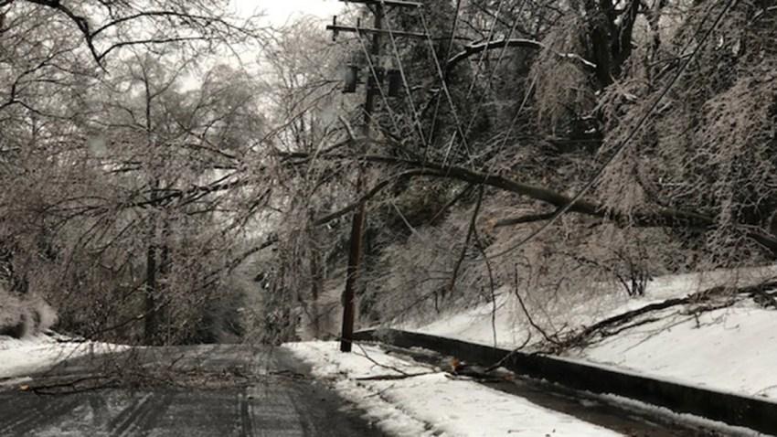 edgehill-hamden-tree-on-wires