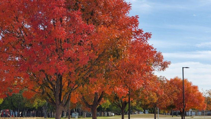 fall-foliage-111119