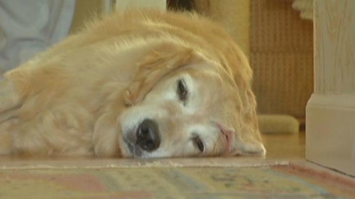 injured dog1
