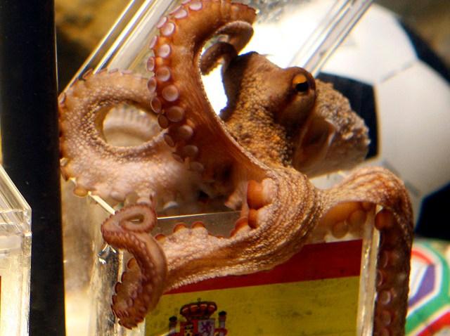 paul_octopus