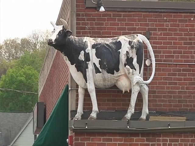 rsz_cow