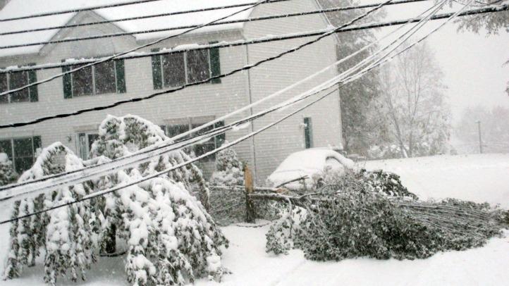 terryville trees snow