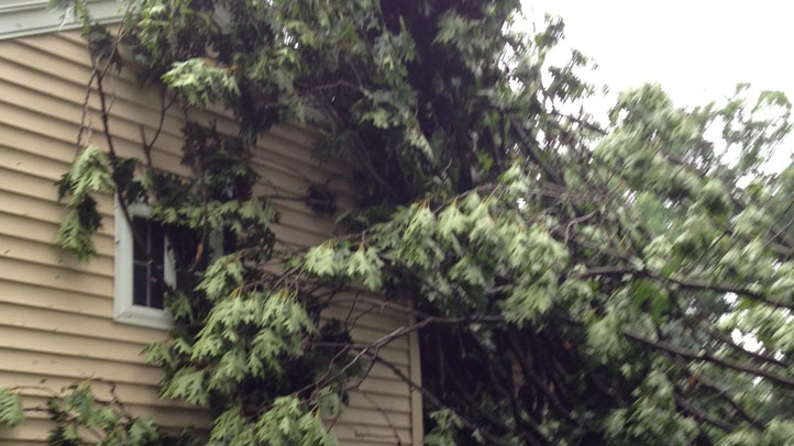 windsor locks tree on house
