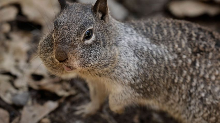 A file photo of a squirrel.