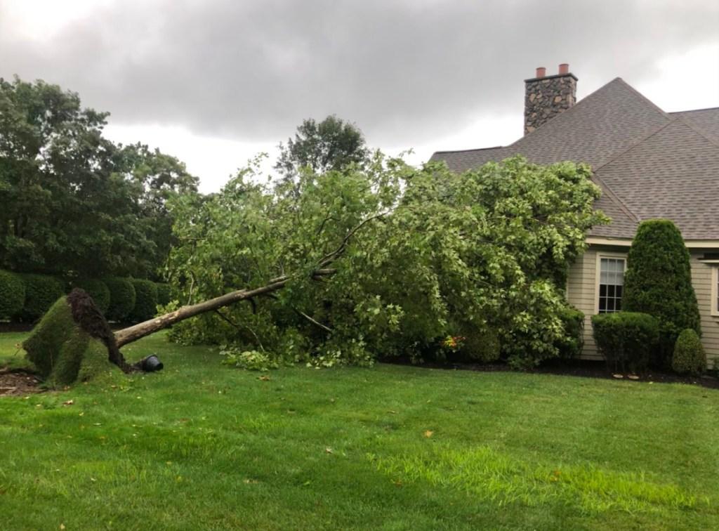 [UGCHAR-CJ] Tree fell into house