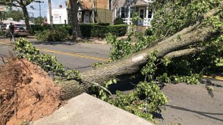 a large tree down across a road in New Haven
