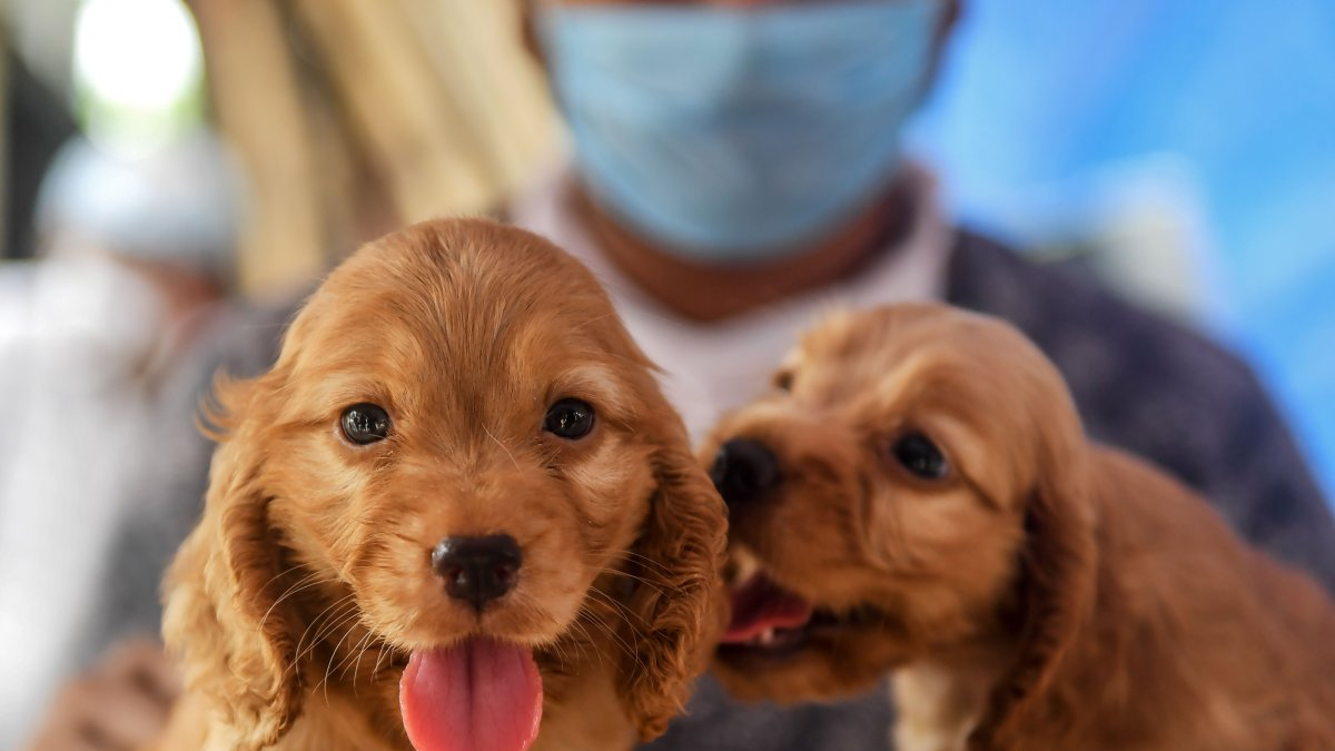 Researchers Find Three-month-old Conn. Dog That Died in February Had Coronavirus
