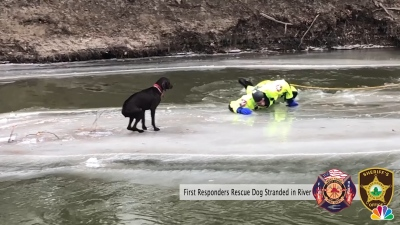 Dog Rescued on Frozen River