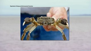 hand holding large crab
