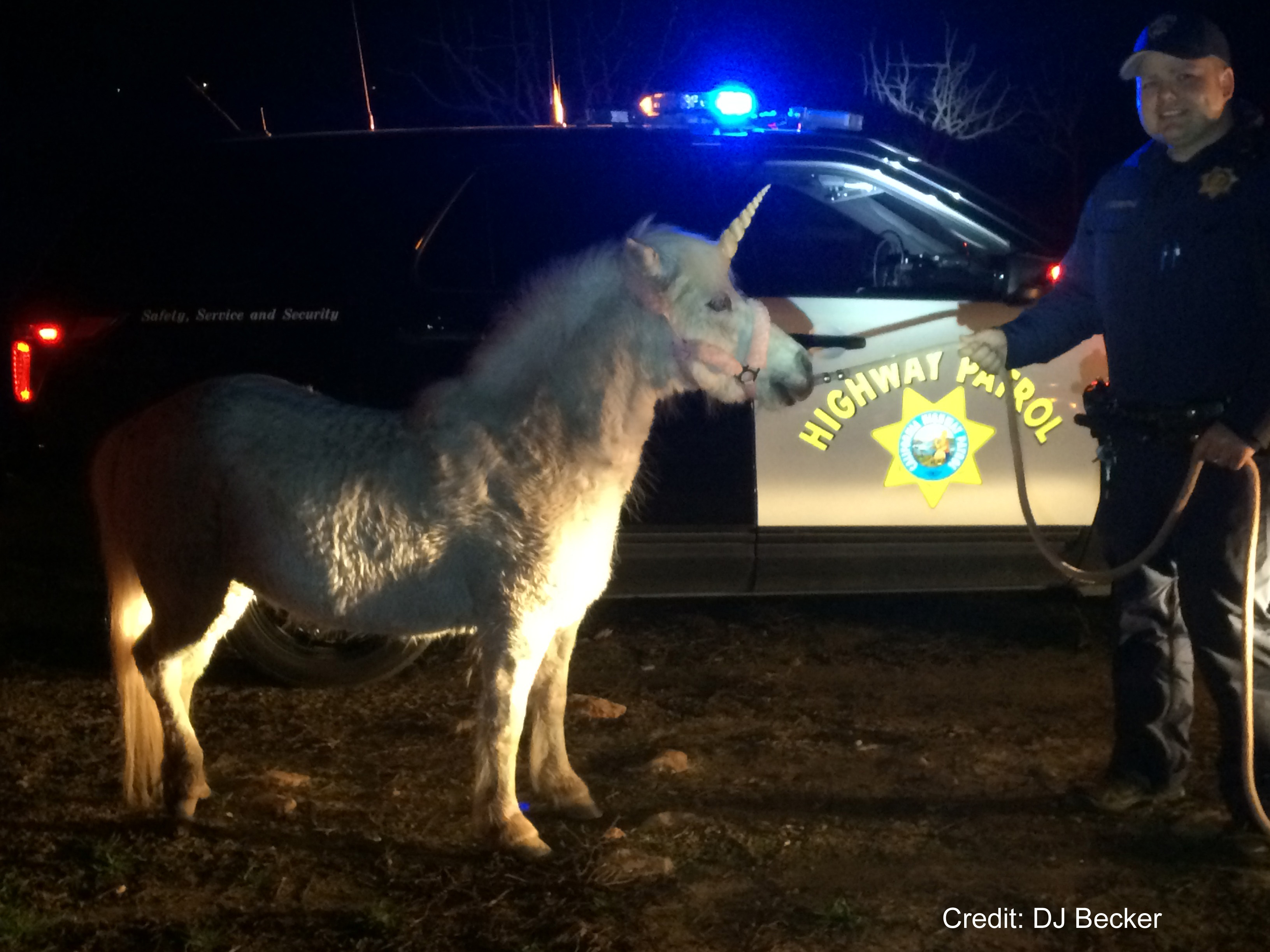 A pony dressed up like a unicorn for a child's birthday party broke loose and had to be located by CHP in Madera, Calif. Feb. 25, 2016.