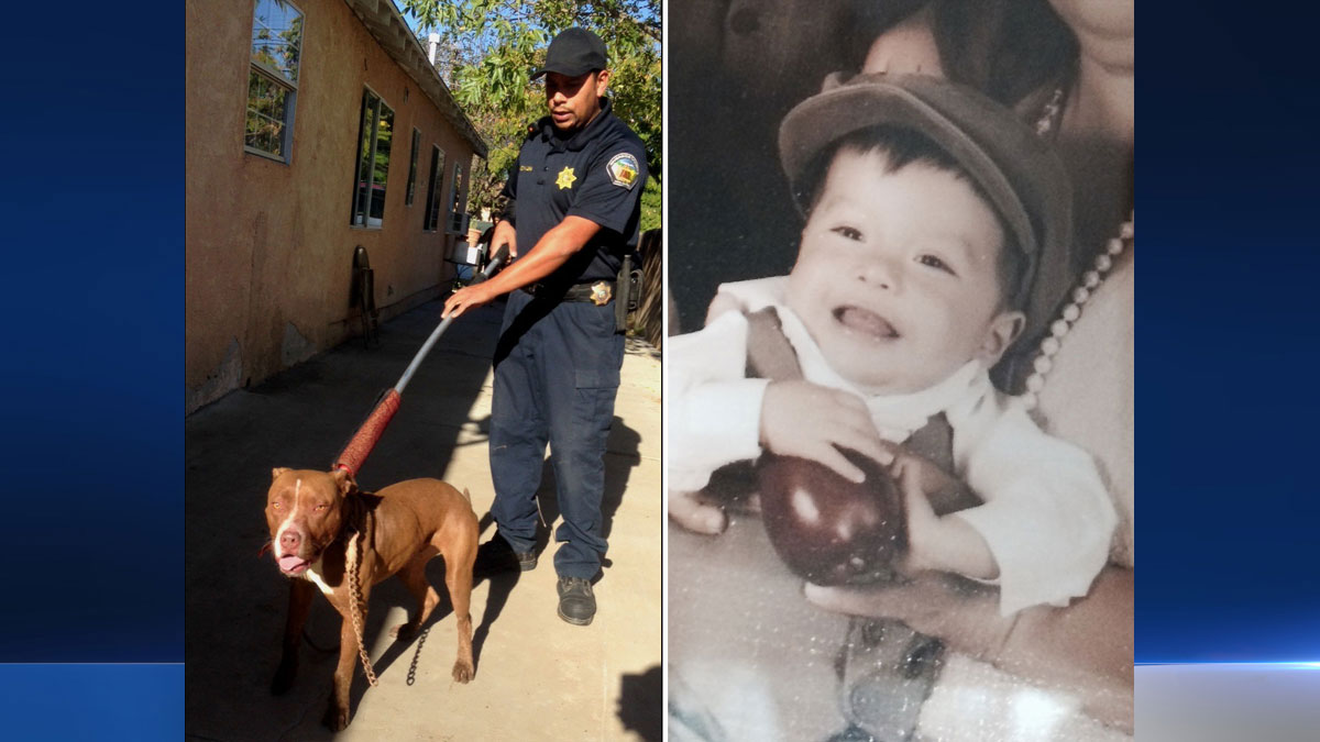 A boy was hospitalized Wednesday Nov. 5, 2014 after an attack involving the family's dog in Riverside County.