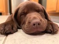 [UGCHAR-CJ-pets]Cute puppy