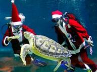 turtle-1217