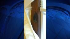 Waterbury Family Displaced Over Bat Infestation