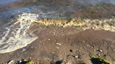 Sewage, Black Algae Found at West Haven Beaches