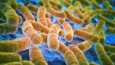 Health Officials: Multistate E.coli Outbreak Sickens 7
