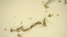 Mosquito Spraying Planned at Pachaug State Forest