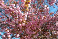 See It Share It: Spring Has Sprung