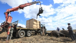 500 Elephants Relocated to Sanctuary in Malawi