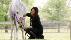 Paint-Covered Horse Adopted by Jon Stewart Dies