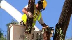 Worker Killed During Tree Removal