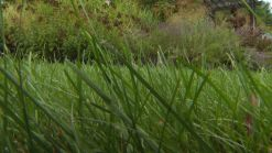 Lawn Care Tips After Drought