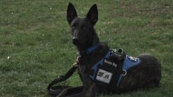 Marine Vet Fired in Battle Over Therapy Dog