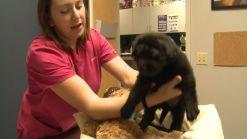 Puppy Survives Teens' BB Gun Abuse